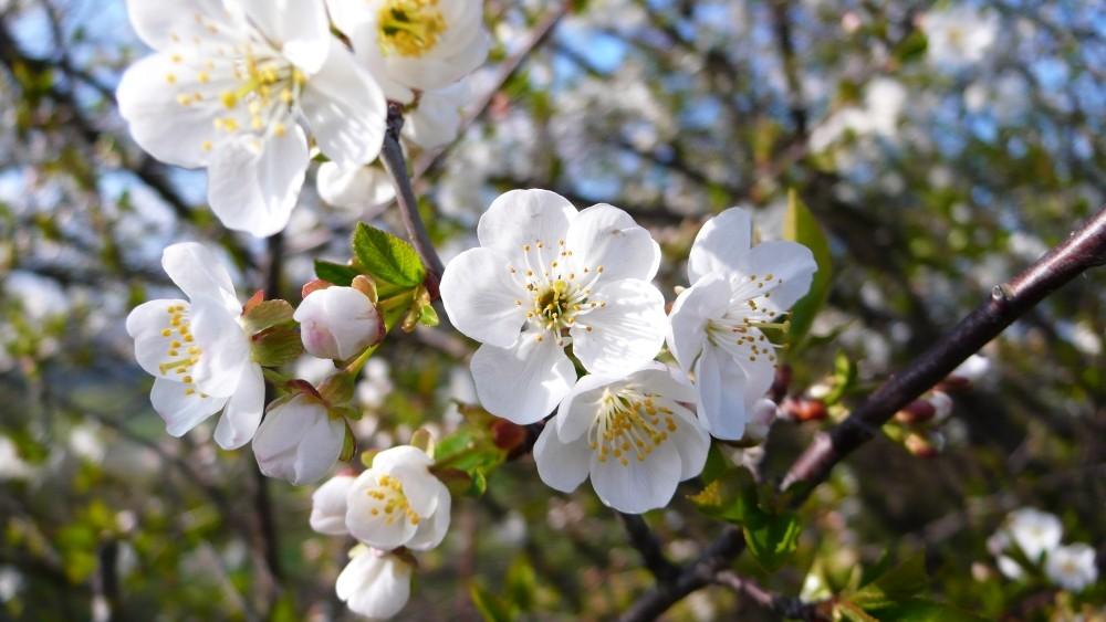 Die Spuren des Frühlings