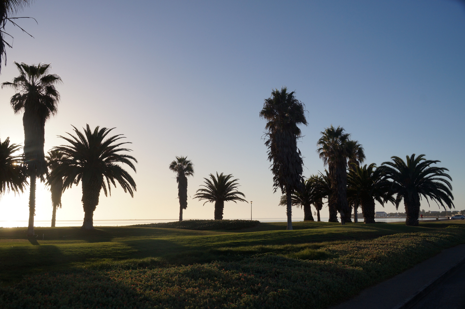 Die Stadt der tausend Palmen