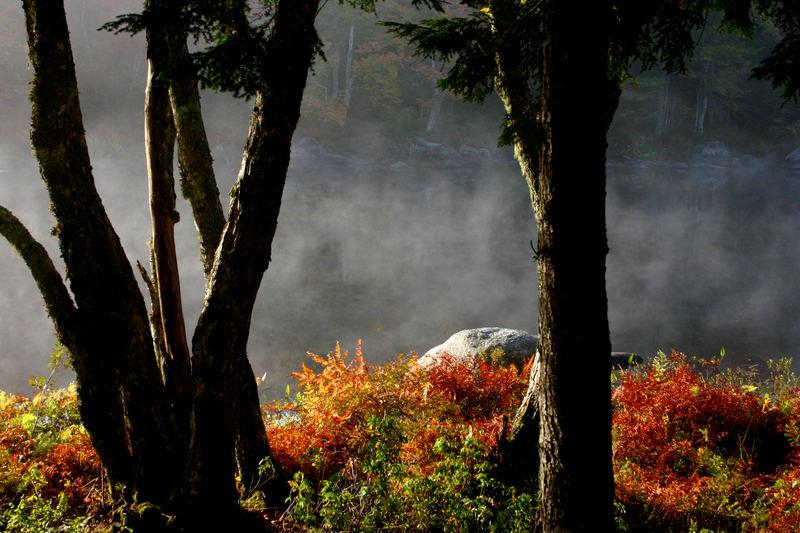 Die Stille des Morgennebels