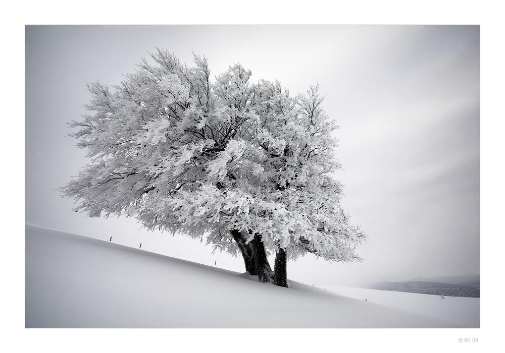 Die Stille eines Wintertages