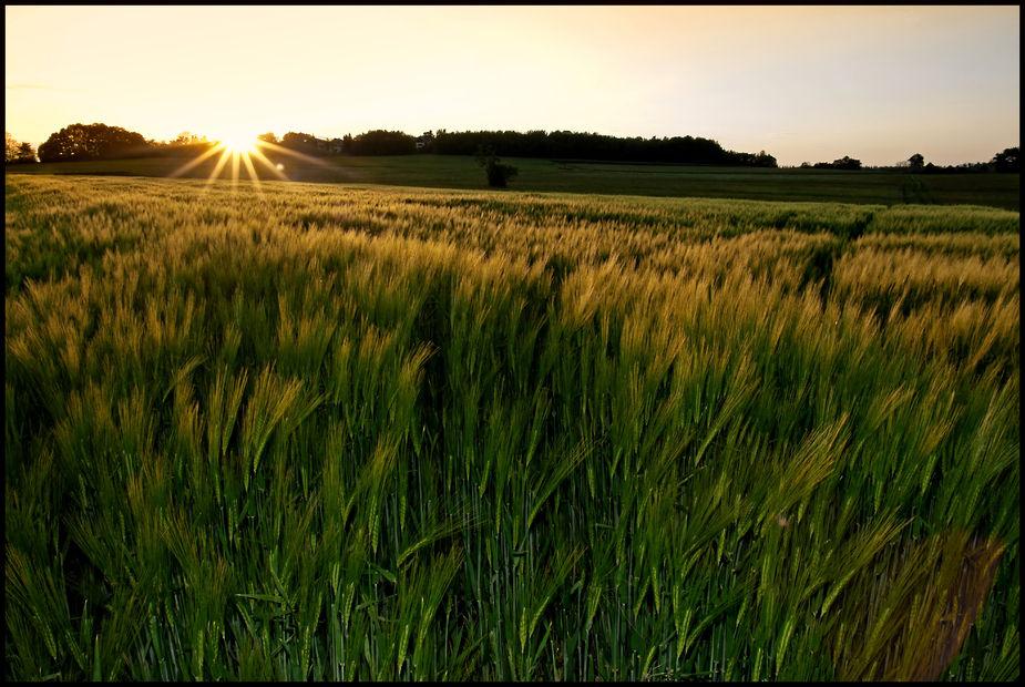 Die Stille im Feld