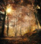 Die Stille im Wald