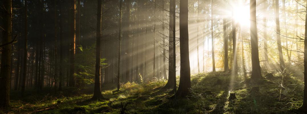 Die Strahlen der Sonne im Herbstwald