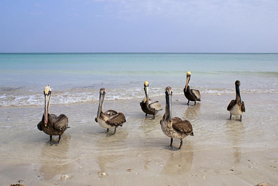 Die Strandwächter