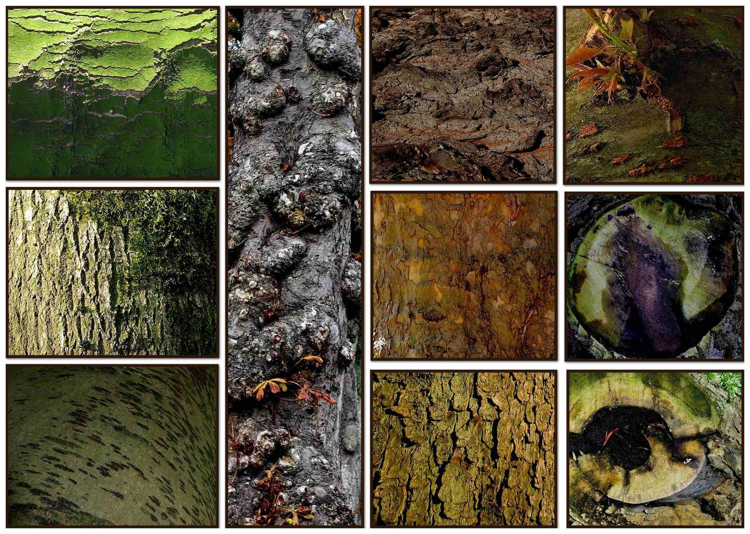 Die Strukturen der Bäume