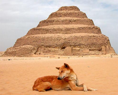 Die Stufenpyramide von Sakkara - Ägypten 6