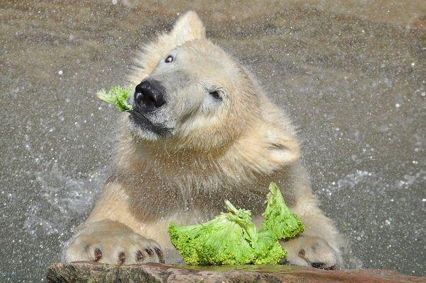 Die süßeste Salatschleuder.....