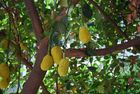 Die süssesten Früchte...