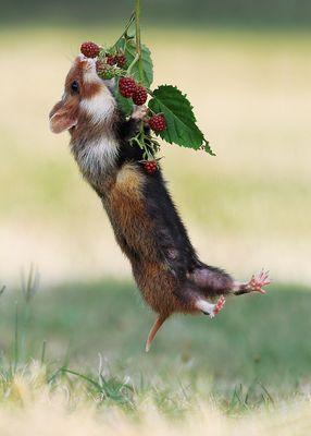 Die süßesten Früchte hängen ganz oben...