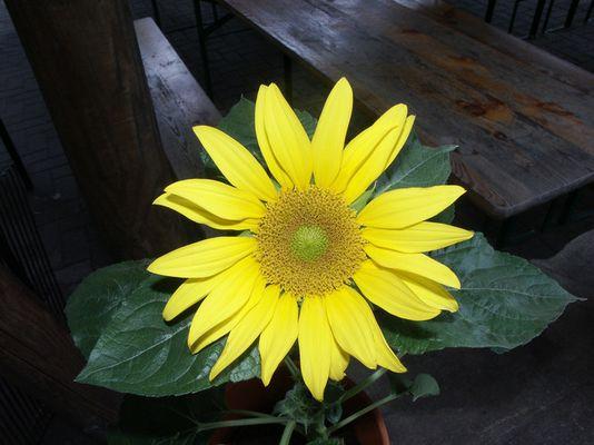 Die SUPER Blume