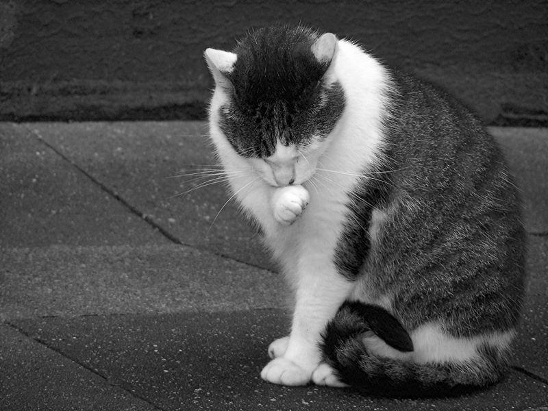 Die tägliche Katzenwäsche.......