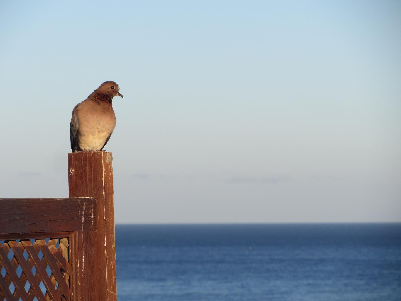 Die Taube und das Meer.