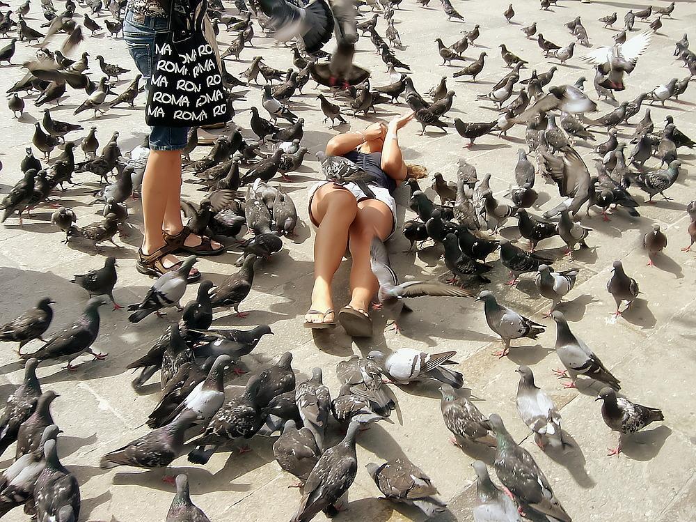 Die Tauben vom Markusplatz in Venedig
