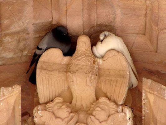 Die Tauben von Astorga...