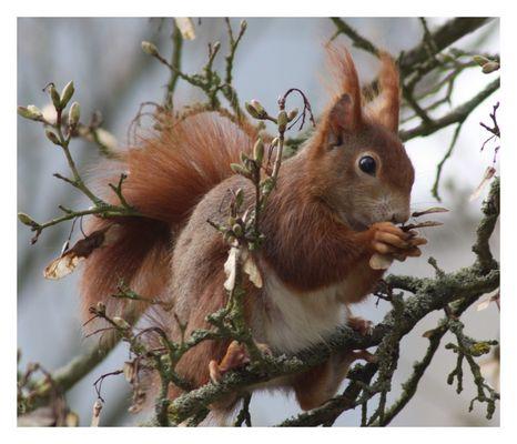 Die Tiere des Waldes erwachen so langsam aus der Winterruhe