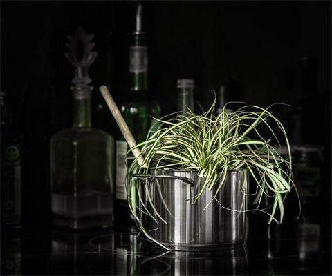 Die Topfpflanze