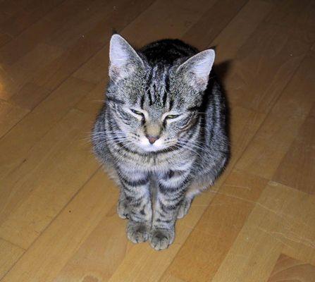 Die total verpennte Katze