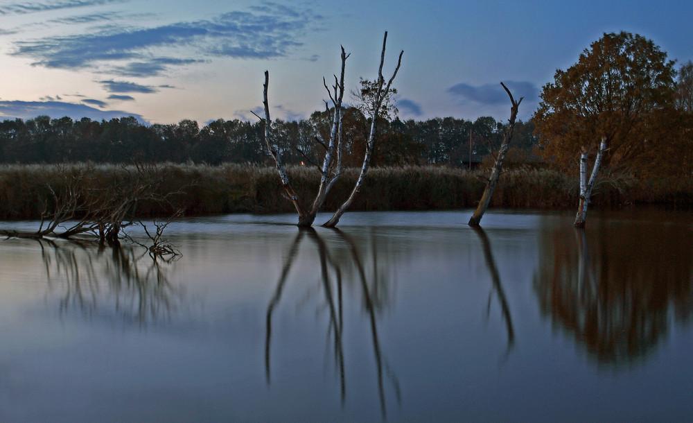 Die Toten Birken im See