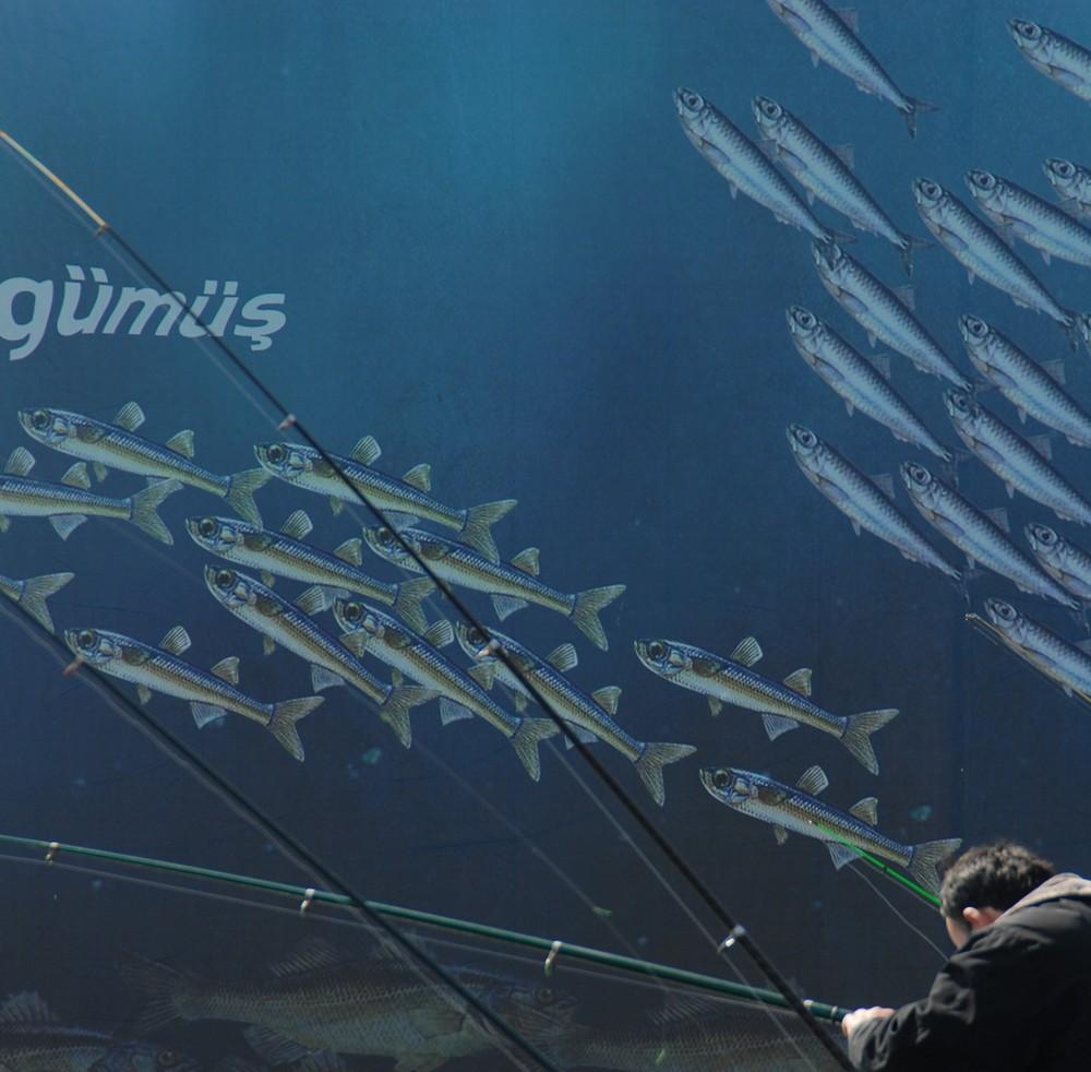 Die Träume des Anglers...