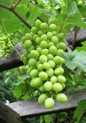 Obst  Gemüse Beeren