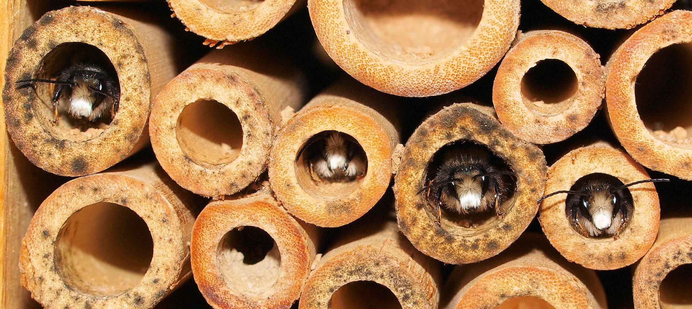 Die traurigsten Bienenmänner der Welt...