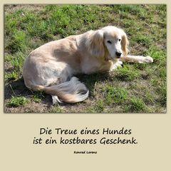 Die Treue eines Hundes....
