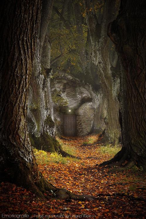Die Tür im Wald