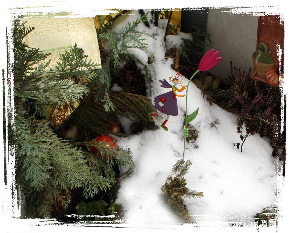 """Die """"Tulpenfee"""" trotzt dem letzen Schnee"""