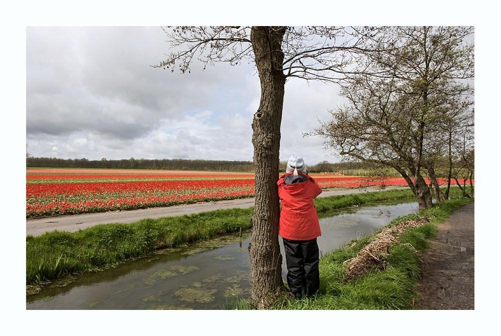 Die  Tulpenfotografin