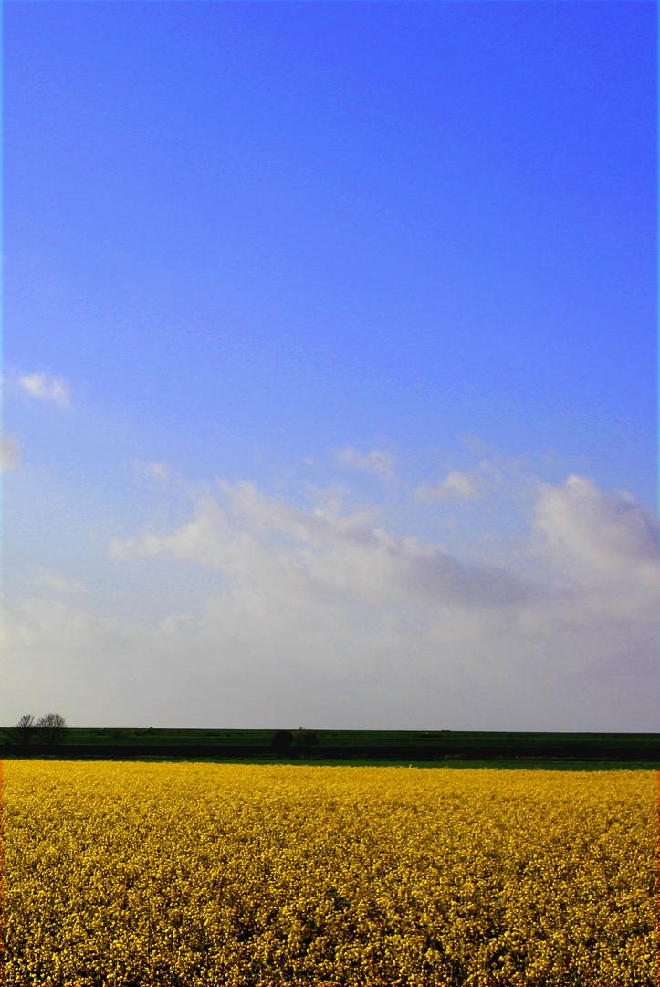 Die ukrainische Flagge...