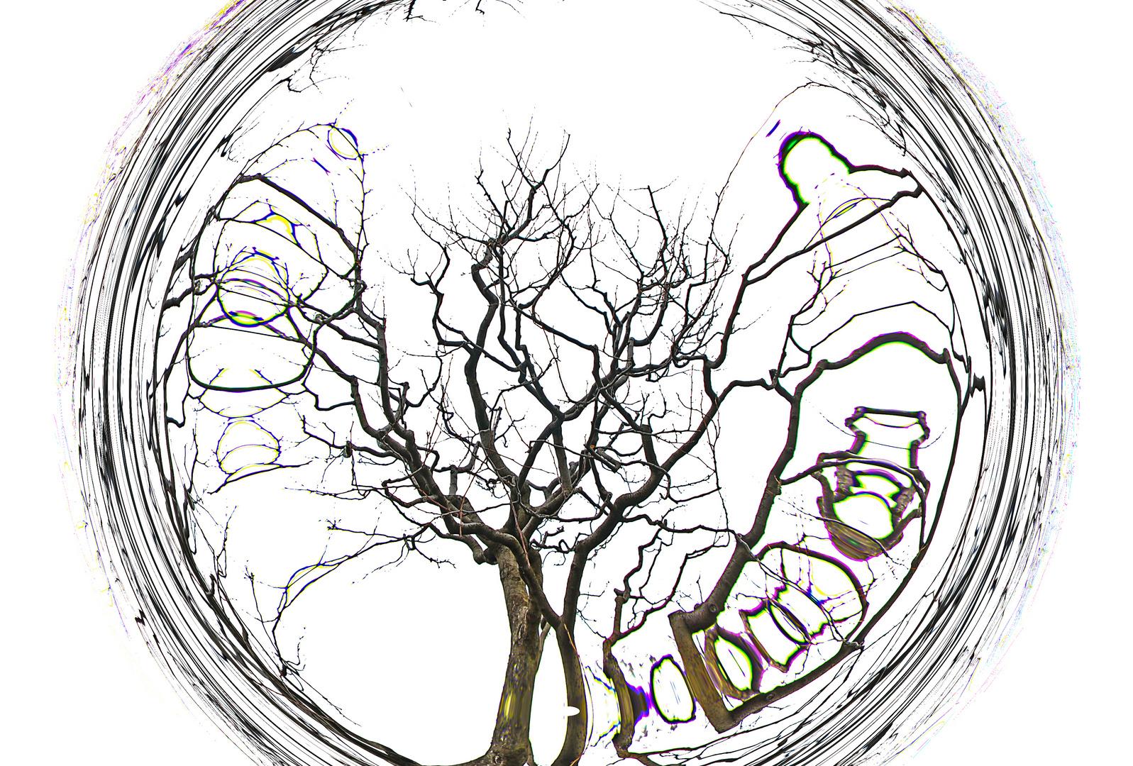 Die Umrundung meines Baumes