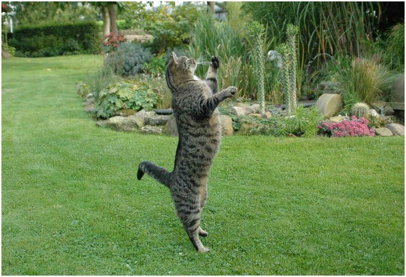 Die ungestiefelte Katze