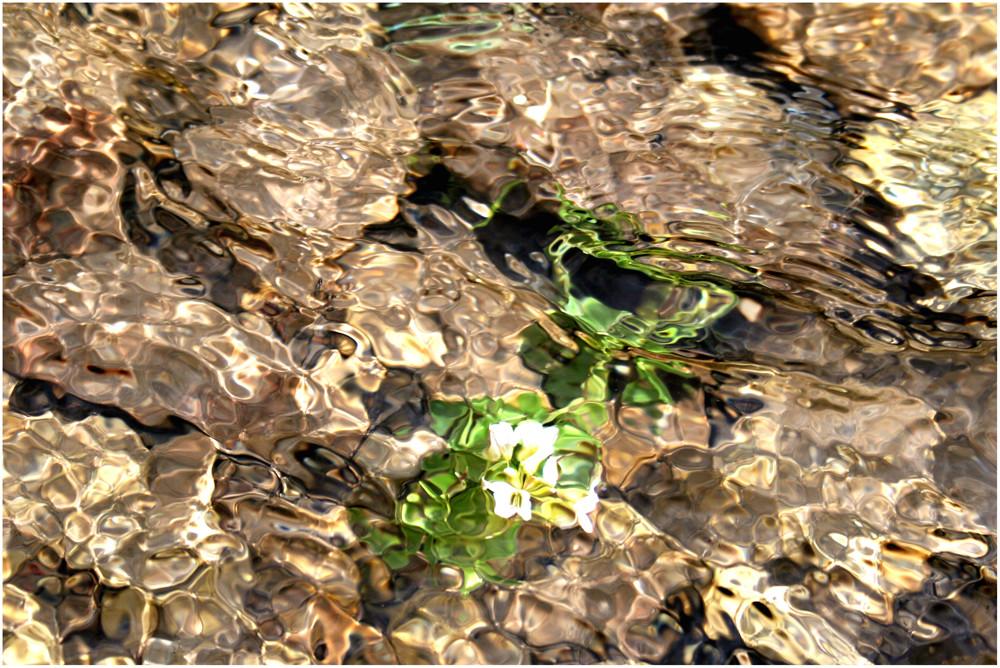 Die Unterwasserblume