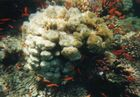 Die Unterwasserwelt des Roten Meeres