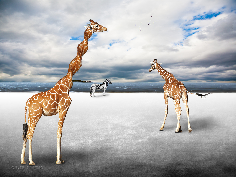 Die verdrehte Giraffe