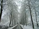 Die vereiste Promenade in Münster