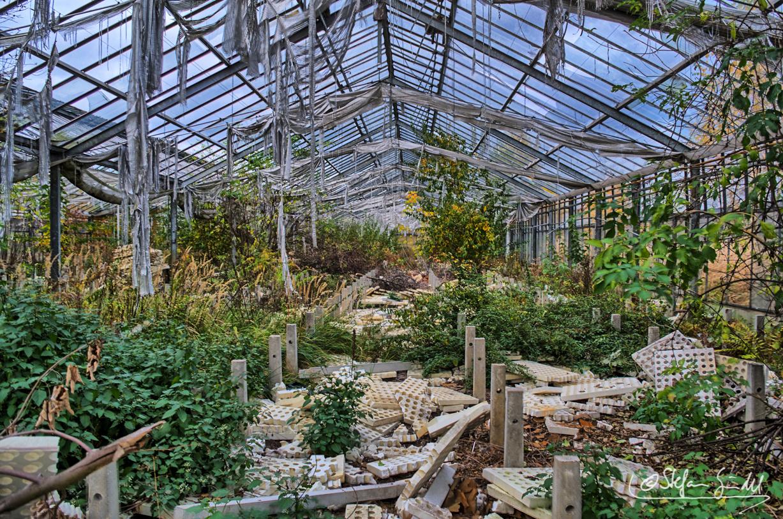 ...die verlassene Gärtnerei...