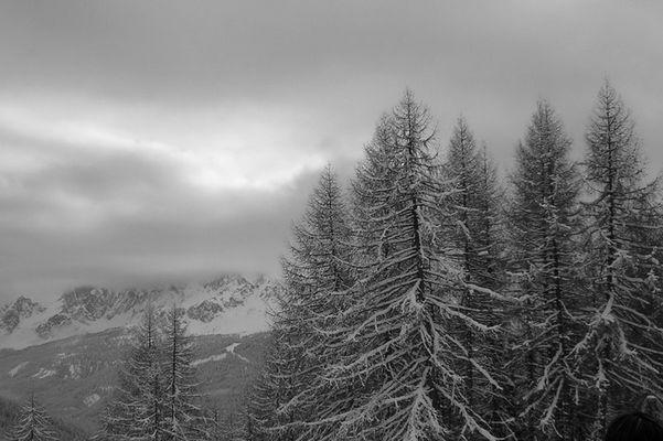 Die verschleierte Winterwelt