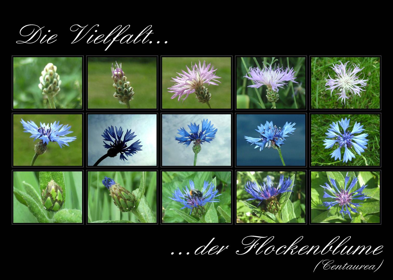 ...Die Vielfalt der Flockenblume...