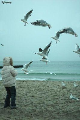 Die Vögel >01<