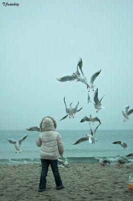 Die Vögel >02<