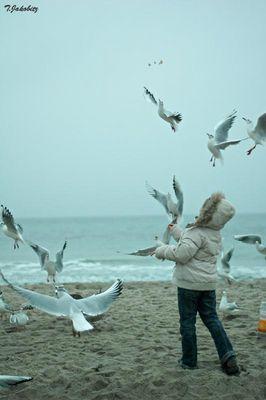 Die Vögel >03<
