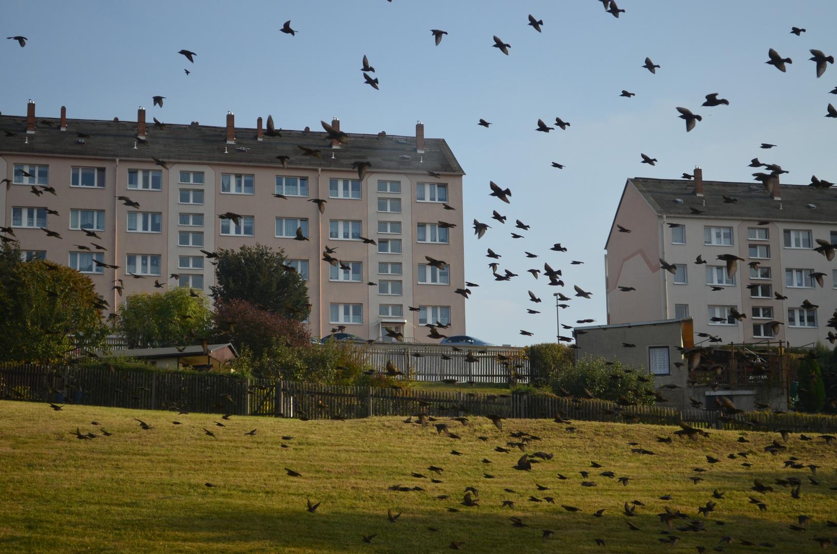 Die Vögel :)