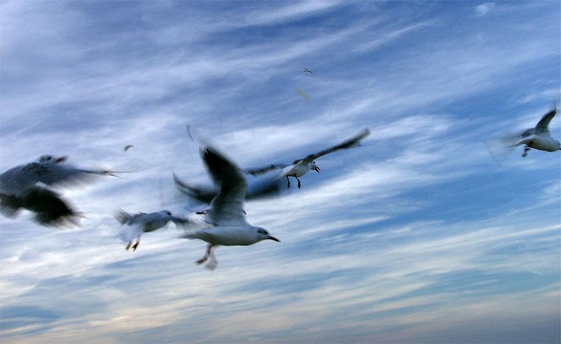 Die Vögel ...