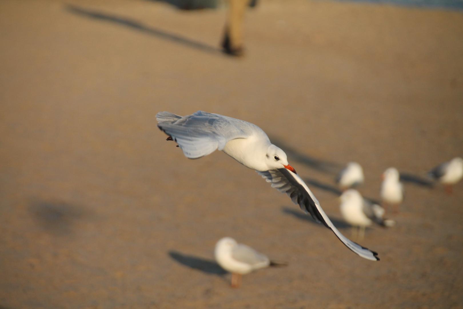 Die Vögel 2