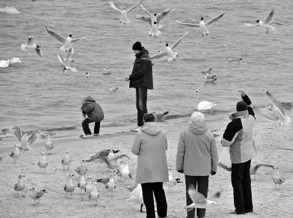 """""""Die Vögel 3"""" oder buntes Treiben in SW"""