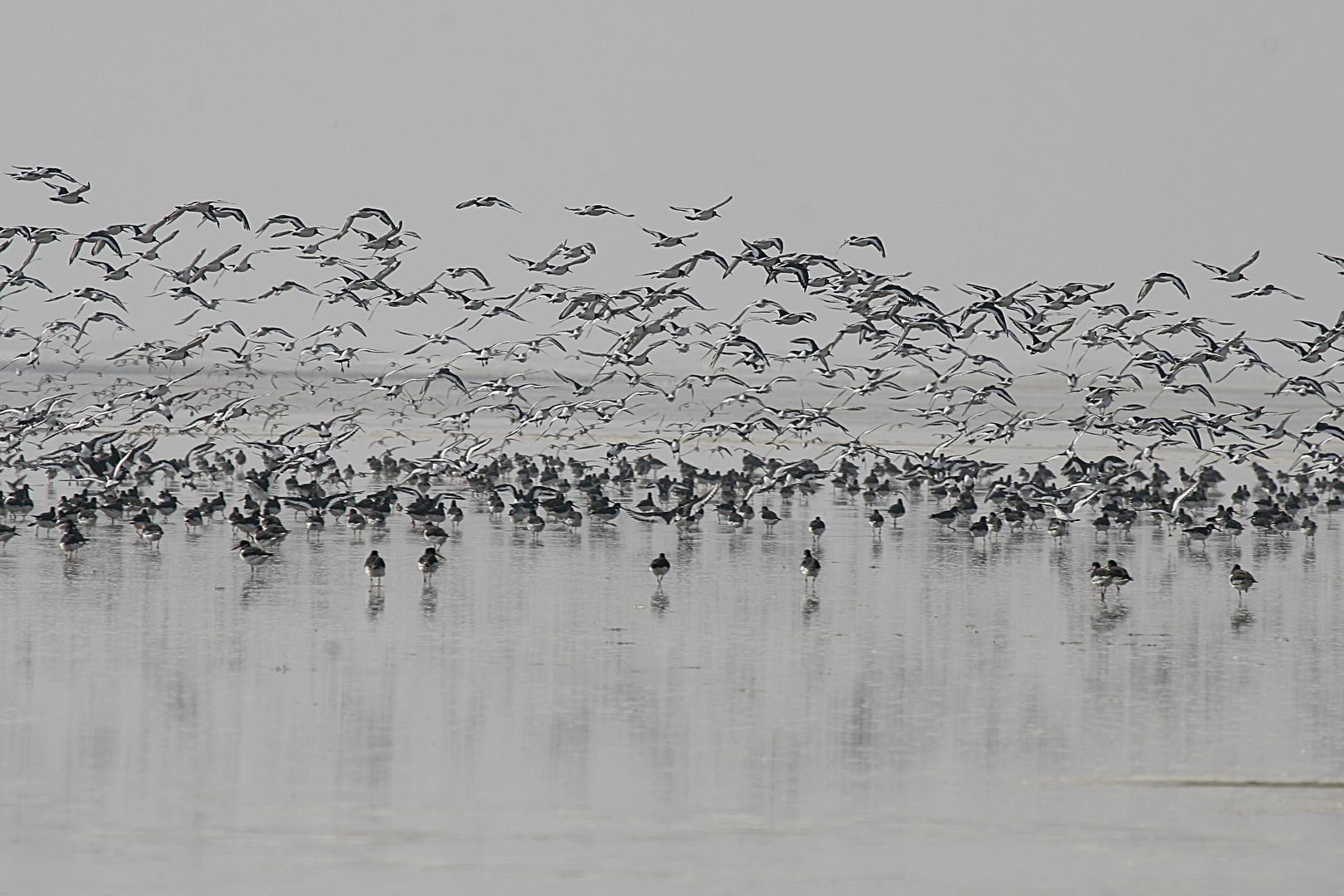 Die Vögel...