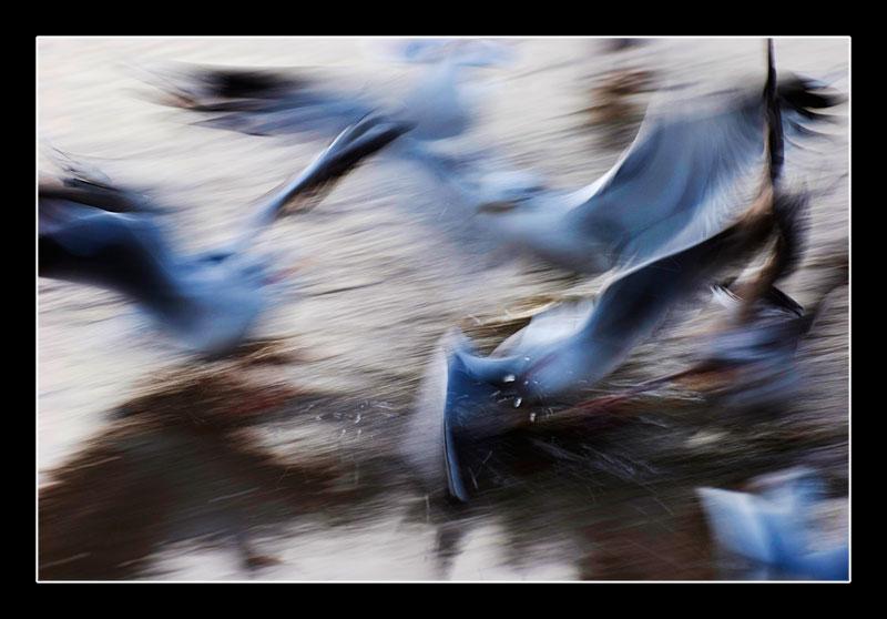 Die Vögel von Jöran
