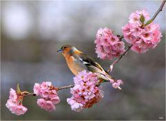 Die Vögel des Himmels singen dir zur Ehr (785)