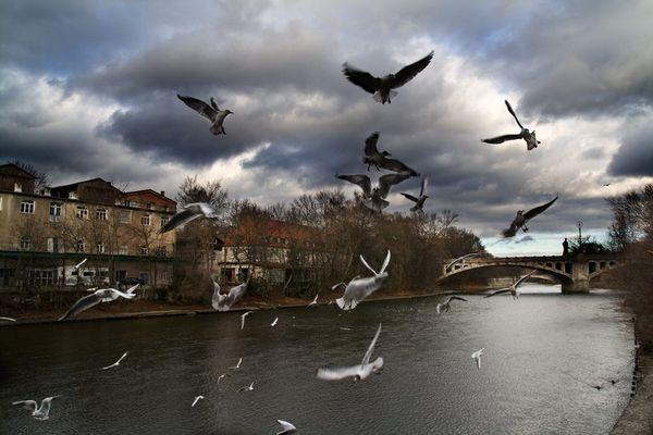 Die Vögel kommen....